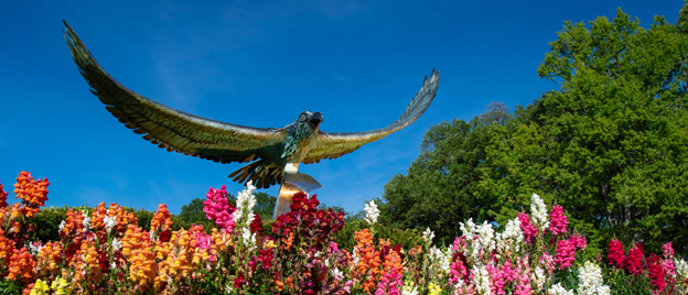 UNCW Seahawk statue amid blooming flowers